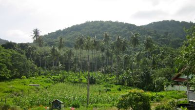 Land for Sale in Nai Harn beach
